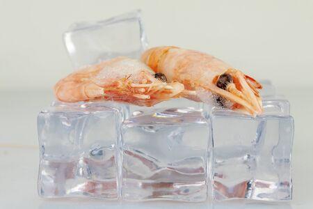 Prawns lie on ice cubes, close-up Reklamní fotografie