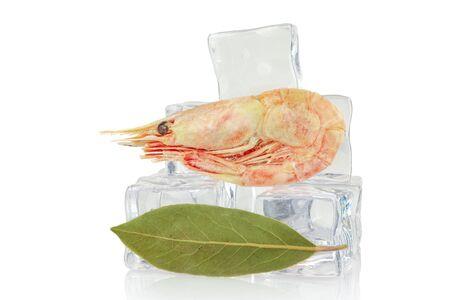 Shrimp on ice cubes background, isolated on white