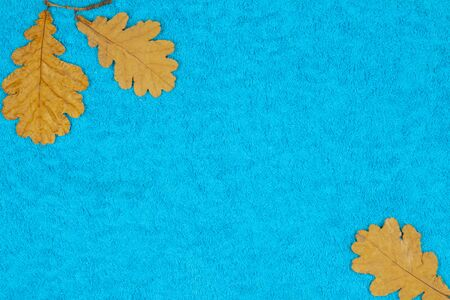 Autumn oak leaves on a colored background
