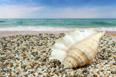 Seashell close-up on the seashore Foto de archivo