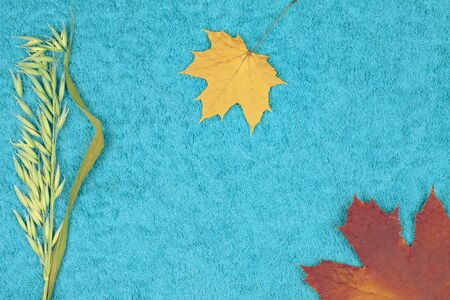 Autumn maple leaves with wheat ear on a colored background Foto de archivo