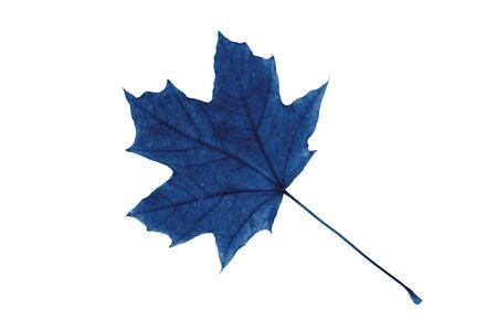 Blue maple leaf on a white Foto de archivo