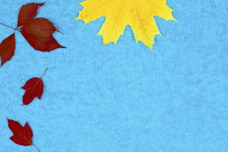 Autumn leaves on a colored background, top view