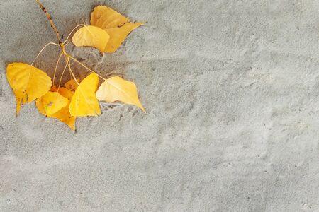 Autumn, yellow leaves lie on shallow sand Foto de archivo