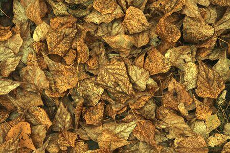 Background, lots of old autumn leaves Foto de archivo - 147758089