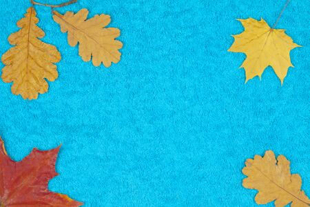 Autumn leaves of maple and oak on a colored background