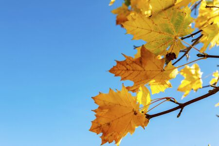 Autumn leaves on tree branches against blue sky Foto de archivo - 149068340