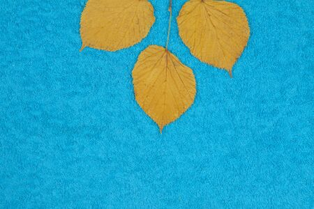 Autumn leaves of lime on a colored background Imagens