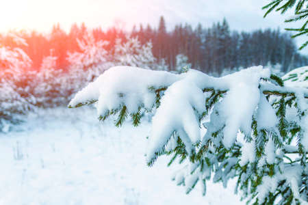 Winter landscape is the edge of a snow-covered forest.