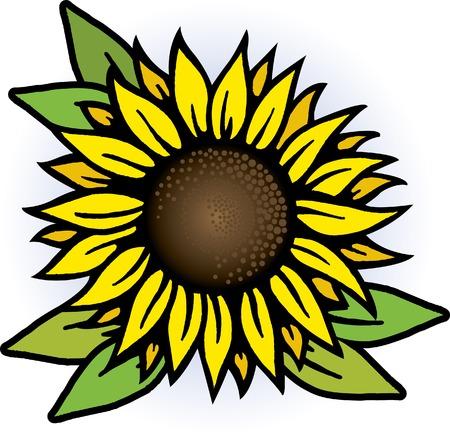 Sunflower Stock Vector - 7052541