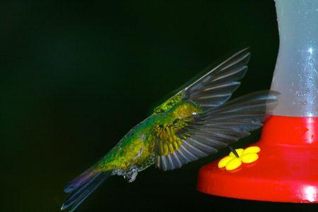 flit: Hummingbird