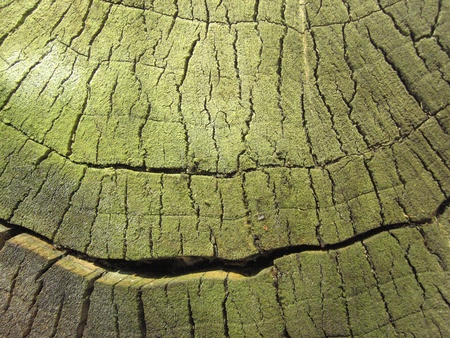a section of an old tree branch cut place with cracks covered in green Stock Photo - 8532518