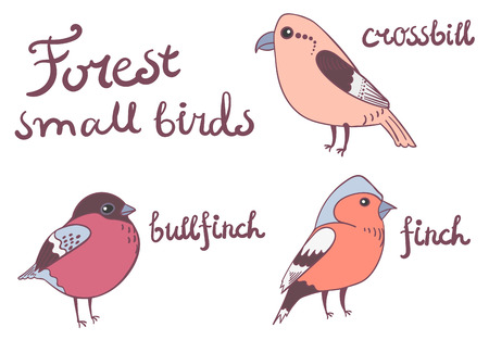 finch: Isolated small forest birds finch, bullfinch, crossbill