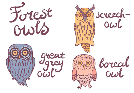 boreal: Isolated forest owls on white background grey owl, boreal, sreech-owl Illustration
