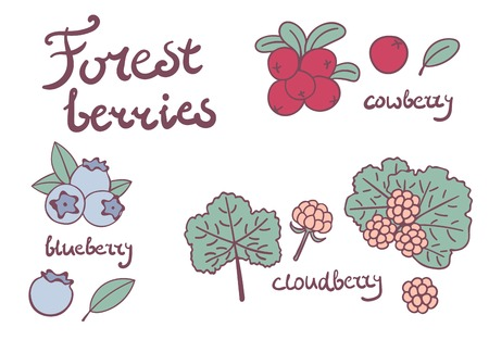 Isolata frutti di bosco su sfondo bianco. Illustrazione Cartoon