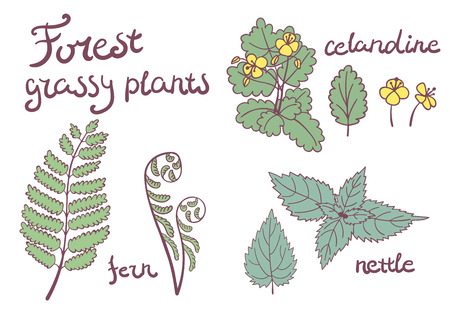 nettle: Forest grassy plants set of isolated objects. fern, nettle, celandine