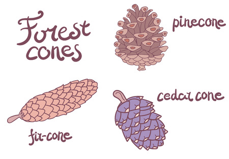 pinecone: Forest conifer cones set of fir-cone, cedar and pinecone. Isolated objects