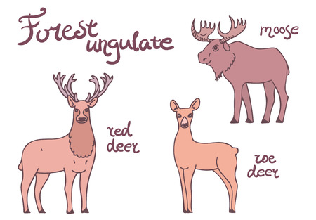 sedate: Forest ungulate animals set. Isolated deers and moose on white background. Illustration