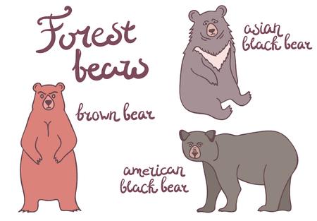 bearish: Forest bears set. Isolated animals illustration on white background.