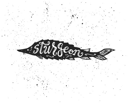 sturgeon: Sea fish silhouette with Sturgeon hand lettering inscription. Ink spots on white background. Illustration