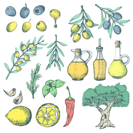 red leaves: Olive products ans supplements set. Colorful sketchy illustrations on white background.