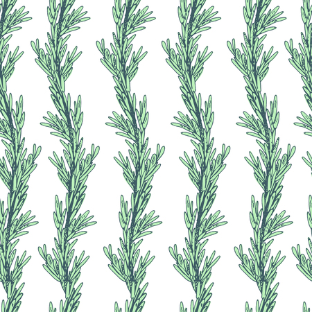 flavoring: Rosemary seamless pattern. Branches in vertical rows. Illustration