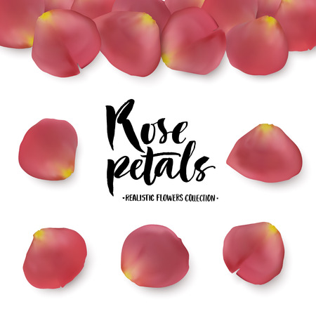 Realistic pink rose petals set. Six different objects, editable shadow on white background. Illustration