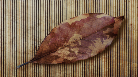 Camouflage Autumn Leaf And Bamboo. Veterans Day. Stock Photo