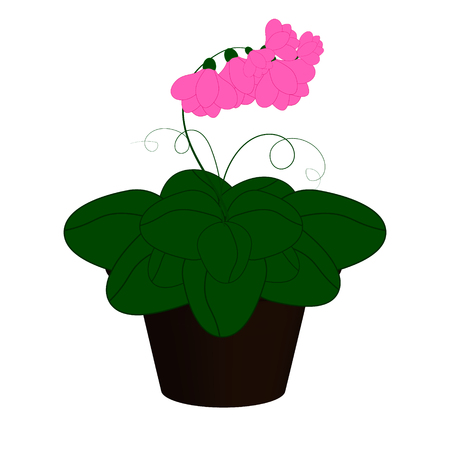 Pink flowers in a pot Illustration
