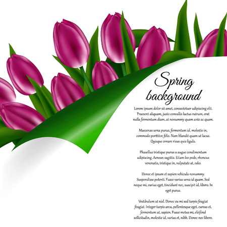 holiday invitation: Holiday Spring background, invitation or card with a bouquet of tulip flowers
