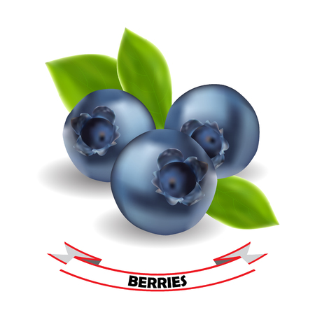 bilberry: Realistic Blueberry, leaves and berries isolated on white background. Vector illustration.