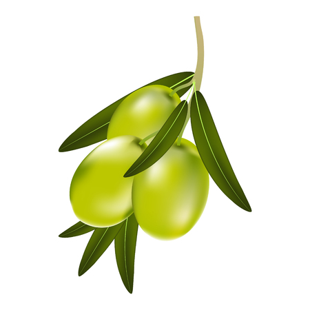 Vector illustration of a branch of green olives with leaves on a white background
