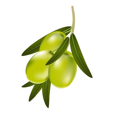 Vector illustratie van een tak van groene olijven met bladeren op een witte achtergrond