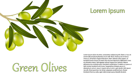 Card greeting card or label with a branch of green olives and leaves on a white background. Vector illustration of a realistic olive.