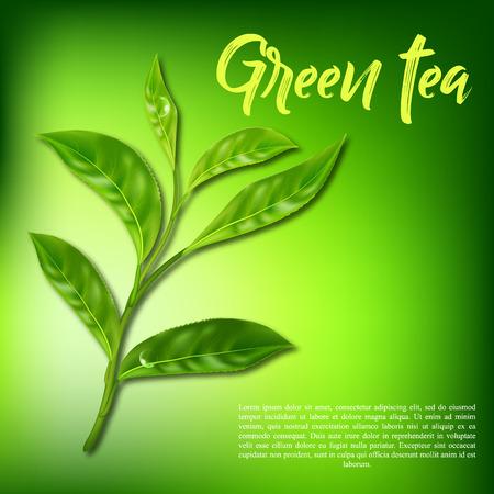 Realistische bladeren van groene thee. Vector 3d illustratie
