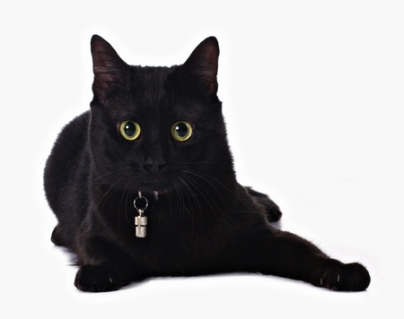 moggi: black cat with yellow eyes isolated on white Stock Photo