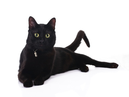 cute black cat lying isolated on white background