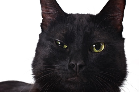 moggi: a portrait of a serious black cat isolated on white Stock Photo