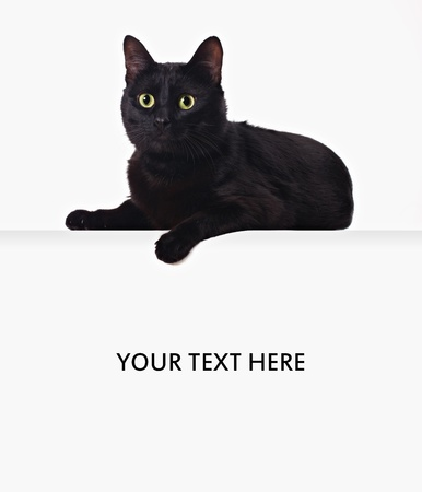 black cat lying on white blank banner isolated on white backgroung photo