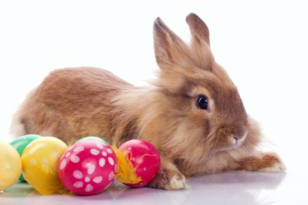 bunnie: Cute bunny with easter eggs isolated on white