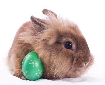 bunnie: Cute bunny with green easter egg on white tissue Stock Photo