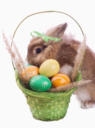 fancy rabbit and green basket with easter eggs isolated on white Stock Photo - 13285994