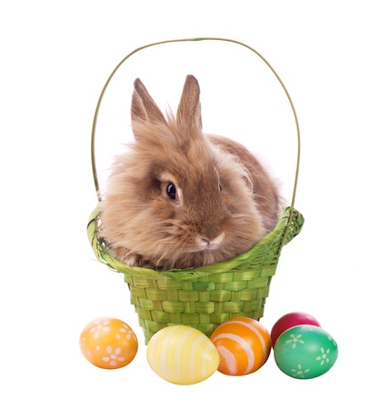 fluffy rabbit in green basket with easter eggs isolated on white Stock Photo - 13285967