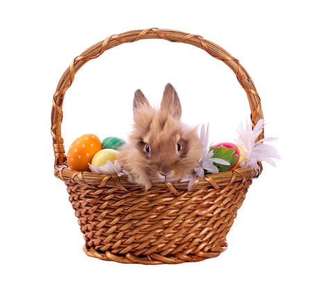 bunnie: Rabbit and Easter eggs in twiggen basket isolated on white