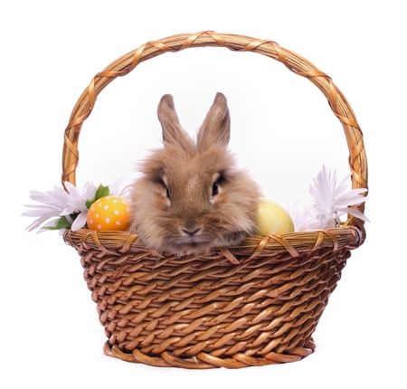 Cute bunny in basket with easter eggs isolated on white photo