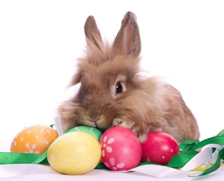 Cute little rabbit and Easter eggs among festive ribbons Stock Photo - 13286004
