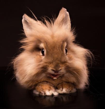 bunnie: happy little rabbit on black background