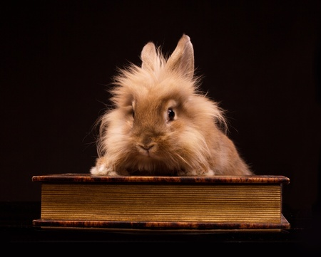 bunnie: cute little rabbit sitting on an old book on black background Stock Photo