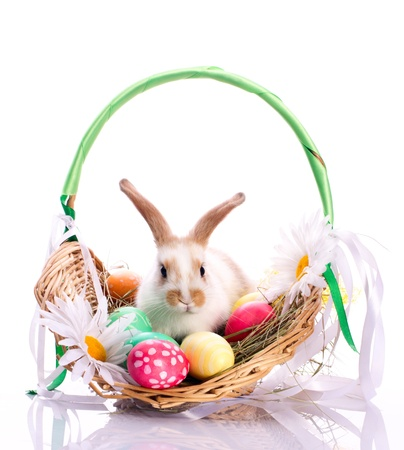fluffy ears: Cute bunny in basket and easter eggs isolated on white