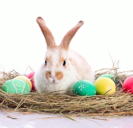 velours: Easter rabbit and easter eggs in velours grasses isolated on white